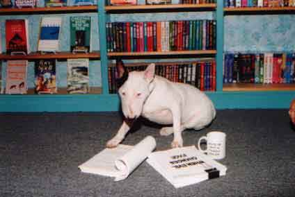 "Bella, a terrier, sits on the floor of a bookstore, mug of coffee at paw, manuscript ""When Evil Changes Face"" in front of her."